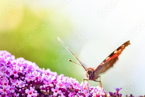 Canvas Vlinder papillon butinant en macro