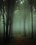 Dreamy foggy dark forest. Trail in moody forest. Alone and creepy feeling in the woods