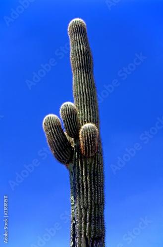 Aluminium Arizona Saguaro