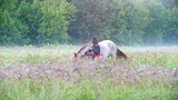 The girl wears a headband on a horse among the grass against the forest and fog - 218202140
