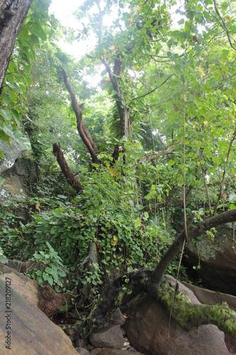 Aluminium Olijf Tropical forest