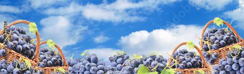 Winogrona przeciw niebieskiemu niebu