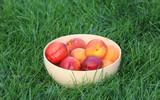 Peaches in a bowl - 218227598