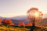 Amazing scene on autumn mountains. Yellow and orange trees in fantastic morning sunlight. Carpathians, Europe. Landscape photography - 218231705
