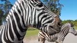 Serengeti Park Germany ( Hodenhagen)
