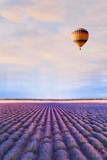 travel destination, beautiful dream inspirational landscape with hot air balloon flying above lavender fields in Provence, tourism in France - 218233504