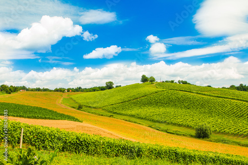 In de dag Wijngaard Beautiful idyllic green countryside landscape in Daruvar region, Croatia, vineyard on hills
