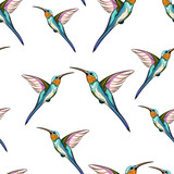 Humming birds. Seamless pattern of exotic tropical humming bird. Hand drawn illustration. White background.