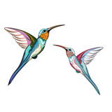 Humming birds. Set of two exotic tropical humming bird. Hand drawn illustration.