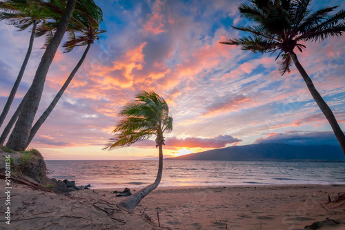 Tropical Palms at Sunset