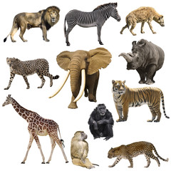 African animals set © SunnyS