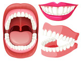 Set of mouth and teeth - 218298393