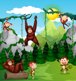 Monkey and chimpanzee in nature