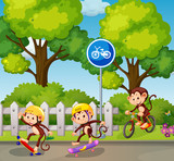 Monkey riding a bicycle and skateboard - 218316952