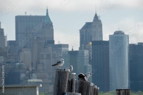 Sea Gull at Ellis Island