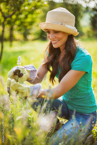 Young woman is cutting lavender in her garden.
