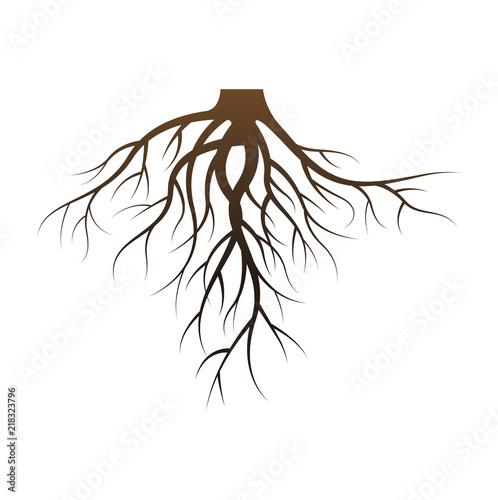 Naklejka Vector Illustration : Roots design