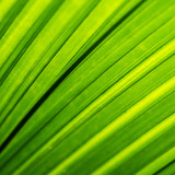 Macro shot of backlit green foliage texture - 218337934