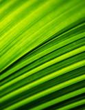 Macro shot of backlit green foliage texture - 218337939