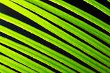 Macro shot of backlit green foliage texture - 218337954