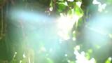 Santorini Sun Flare through Tree - 218340508
