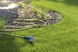 Rubber garden hose laying on lawn and bark garden rim. - 218356995