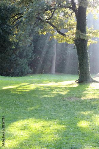 Aluminium Olijf Magic Forest