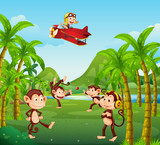 A group of monkey in jungle - 218363129