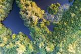 árvores de lagoa, vista aérea - 218375161