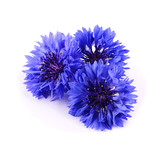 Blue cornflower herb isolated on white background