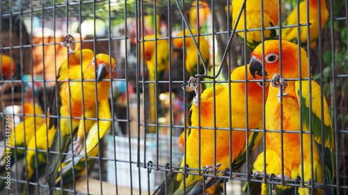 Aluminium Papegaai Yellow and orange parrot in a cage at public park. Jandaya Parakeet.
