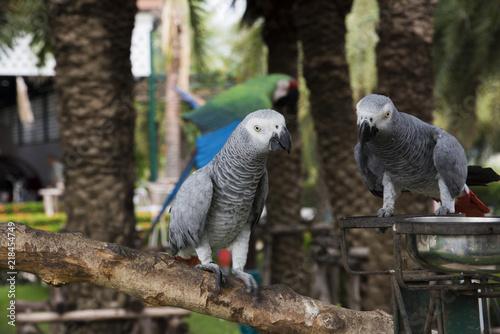 Aluminium Papegaai Gray African Parrot
