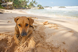 Dog lying on the sand.
