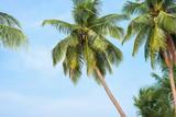Coconut tree on beach.