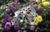 Phalaenopsis orchid blur various flawers background white leaf blossoms yellow green stem