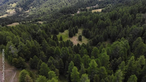 Drone footage 4K, flying over a pine forest