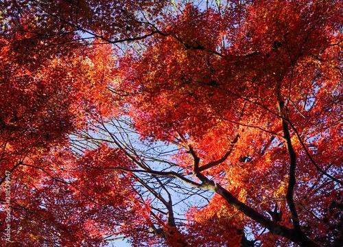 Fotobehang Bruin Autumn garden in Tokyo, Japan
