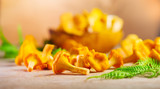 Raw wild chanterelle mushrooms on old rustic table background. Organic fresh chanterelles background. Soft focus - 218590701