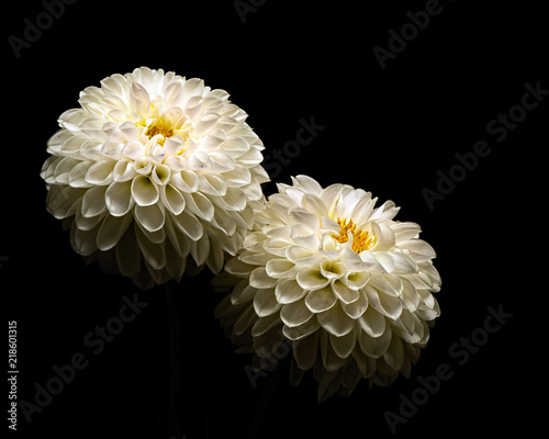 Small White Dahlia PAir 0817