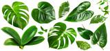 Jungle green leaves - 218610702