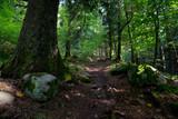 Vogesen Wald bei Mittlach