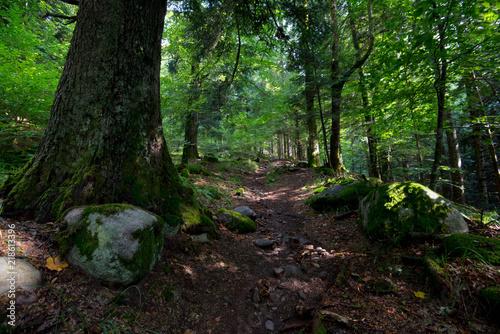 Fotobehang Weg in bos Vogesen Wald bei Mittlach