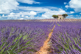 old french house on top of lavender field in provence france colorful purple closeup macro shot agriculture background