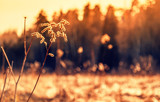 Beautiful autumn landscape, dry plant in the forest against the sunset, abstract natural background and texture