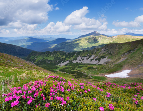 Canvas Blauwe hemel Summer landscape with pink flowers in the mountains