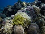 Korallengarten am Biorock Project Pemuteran Bali Indonesien