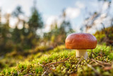 Small forest mushroom into green moss with selective focus - 218678372