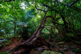 西表島のジャングル
