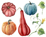 Watercolor set with pumpkins. Hand painted red, blue and orange pumpkins with leaves and branches isolated on white background. Autumn harvest. Botanical illustration for design, print. - 218693588