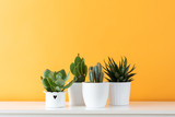 Collection of various cactus and succulent plants in different pots. Potted cactus house plants on white shelf against pastel mustard colored wall. - 218726925